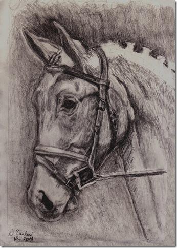 horse study #1 5x7 11.13.09